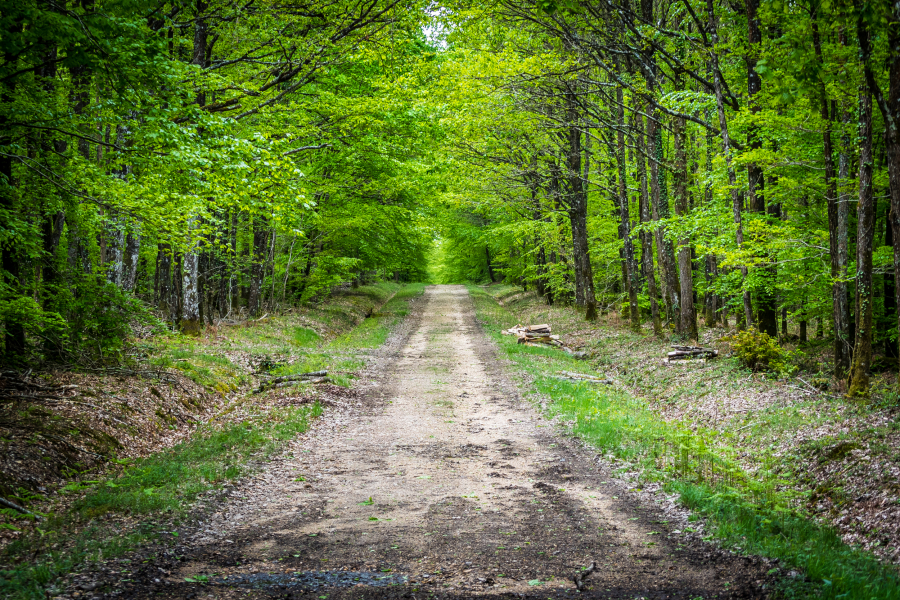 Forêt de Bercé / Sarthe