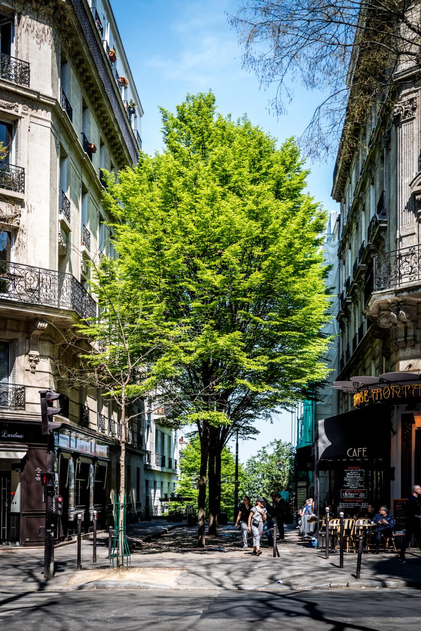 Paris au vert